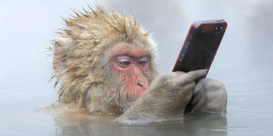 Мобильные телефоны сделают из нас обезьян