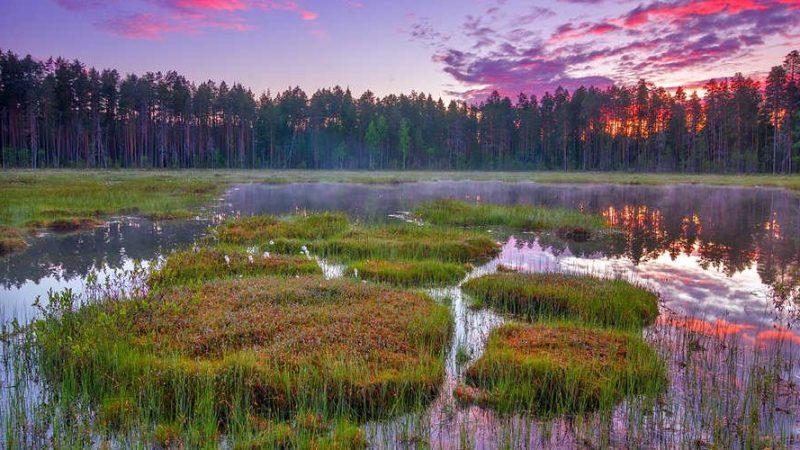 Мифология и легенды болот России