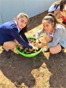 Avedisian School students planting on roof garden