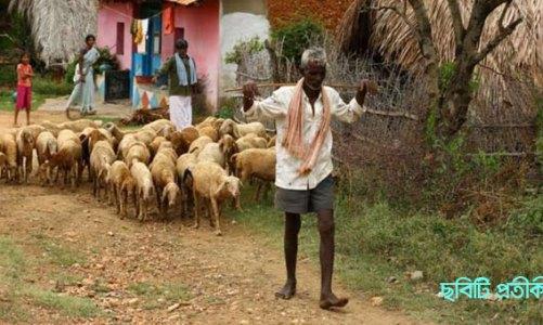 করোনা : মেষপালকসহ ৫০ ছাগল-ভেড়া আইসোলেশনে!