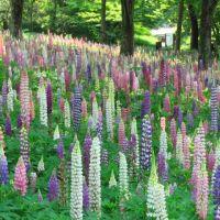 森林公園の初夏の花畑