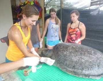 amaidi_centralamerica_costa_rica_animal_recue_wildlife_turle_vjd_04_pp_05