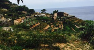 Terrazze di Banyalbufar