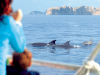 Avvistamento delfini Maiorca