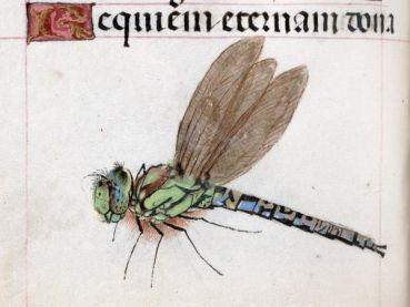 Dragons to Dragonflies