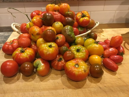 A pile of tomatoes from the garden