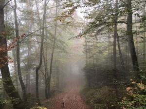 Herbststimmung und Entspannungstherapie im Morgennebel