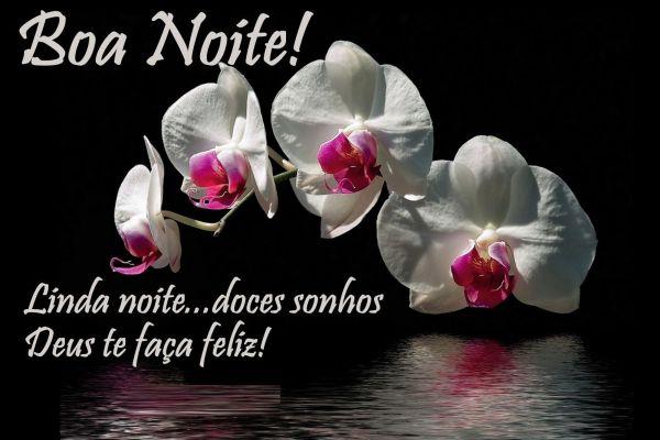 Boa noite com uma linda flor branca com sinonimo de paz