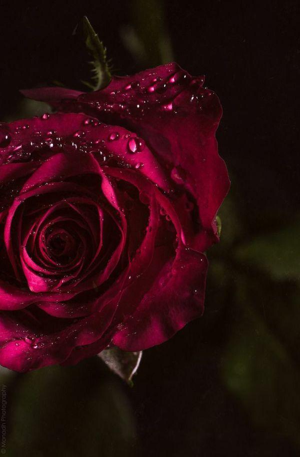flor no meio do escuro molhada