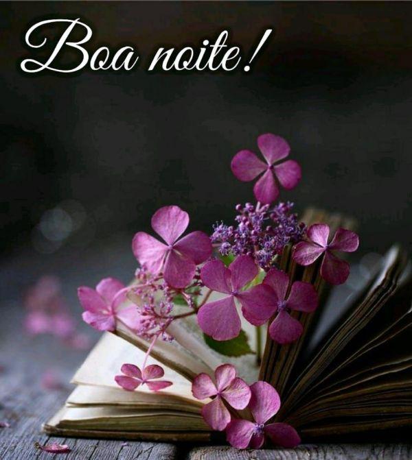 livro com lindas flores dentro e mensagem de boa noite