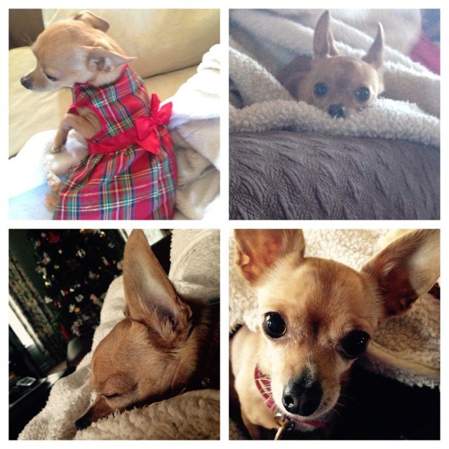 ....And a few pictures of Lily! Do you like her new Christmas dress that she got this year?
