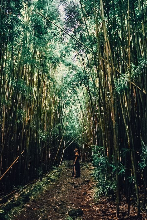 Woman in dress standing amidst bamboo forest, looking up.