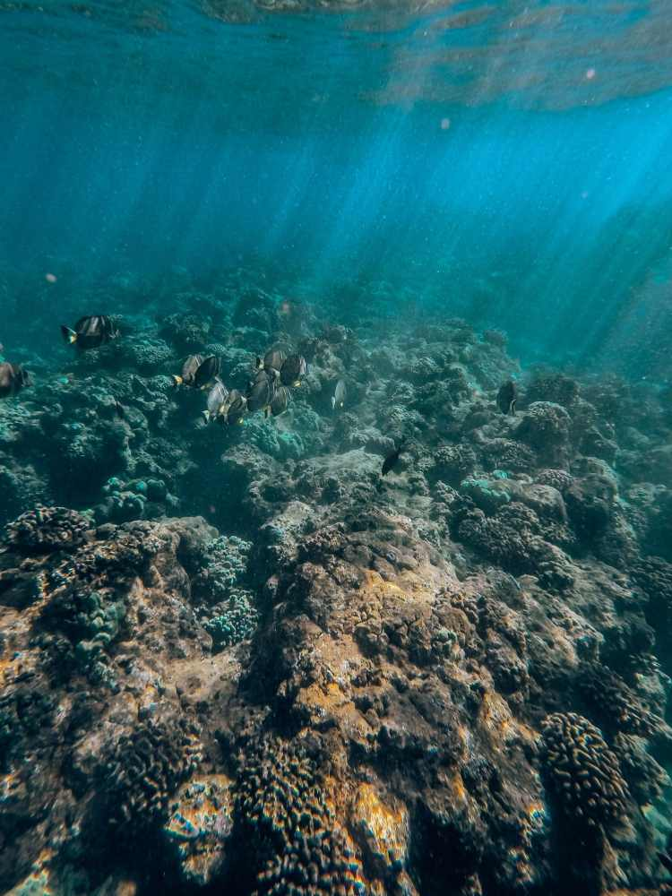 Underwater view of coral and fish
