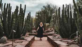 Woman standing amid cacti at Desert Botanical Gardens
