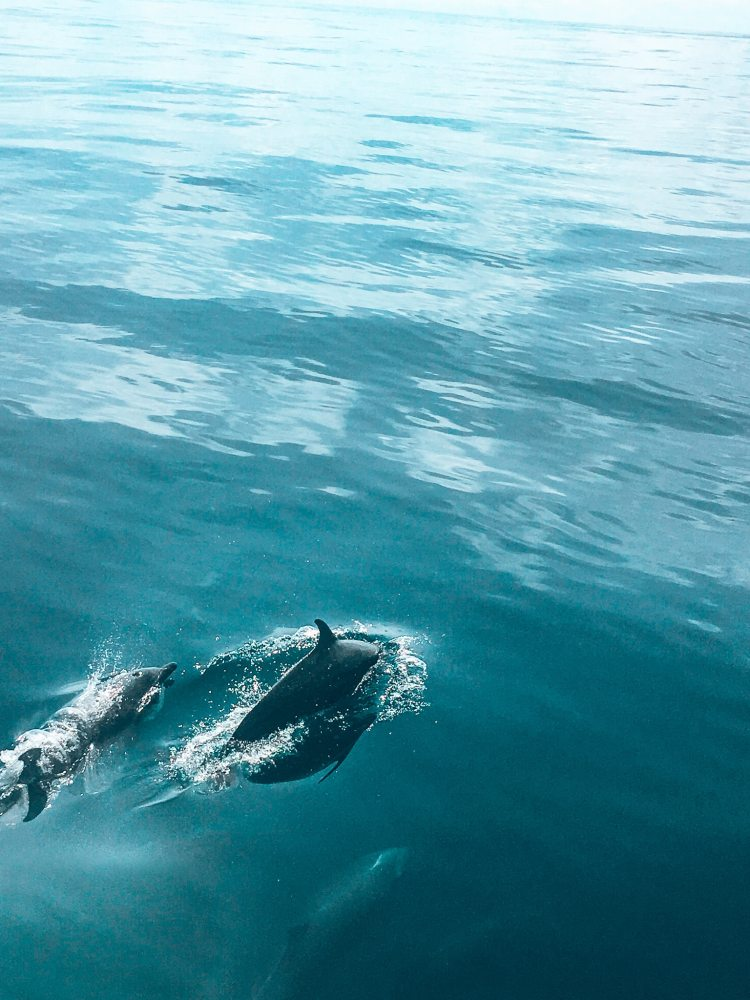 3 dolphins swimming in the water next to the boat