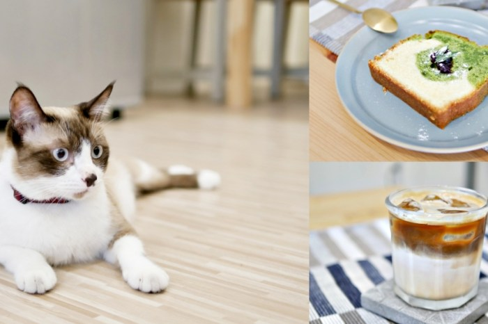 貓奴注意!超療癒貓咪咖啡廳『ATEM Coffee』每日限量甜點吃起來!台南美食|台南下午茶|台南咖啡