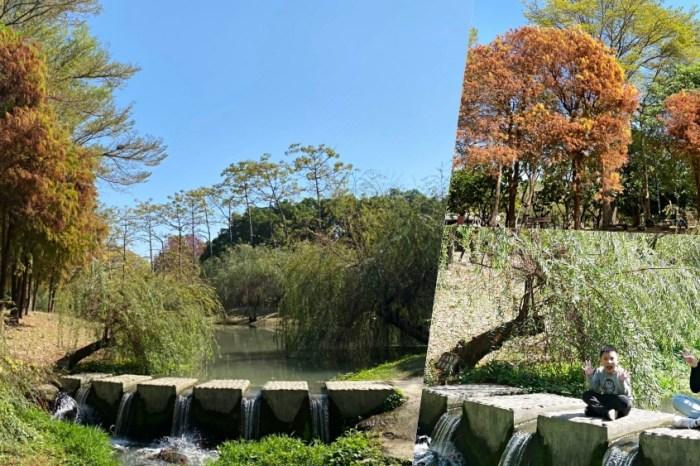 浪漫度破表的超吸睛漸層落羽松『巴克禮紀念公園』把握最佳時機美照衝一波!台南景點 台南旅遊