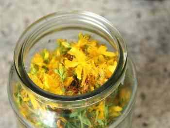 How to make St. John's Wort Infused Oil