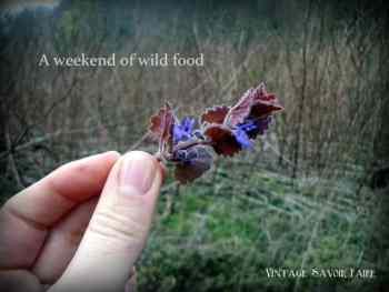 amandacook.me A weekend of wild food