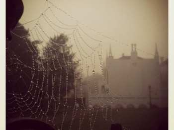 rain and spiderwebs