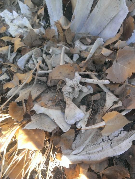 These dry bones needed some life.