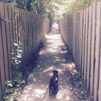 Walks with Lily