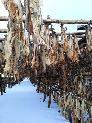 Dried fish farm