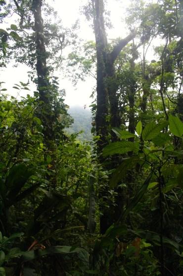 Cero Chato hike