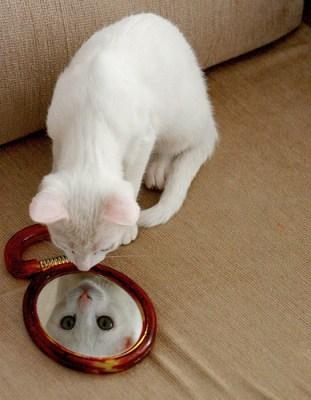 gato no espelho