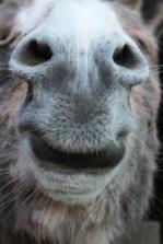 Alfie the donkey says hello