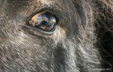 Accidental selfie in a horse