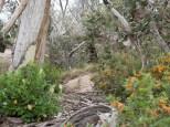 The bush near Mt Buffalo