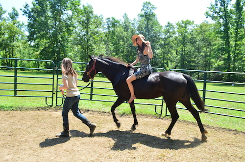 """""""A girl and her horse is definitely true"""" – some ridiculous journal entry made by 6-year-old Amanda Read many years ago, in attempts to let readers know that her journal was not fiction."""
