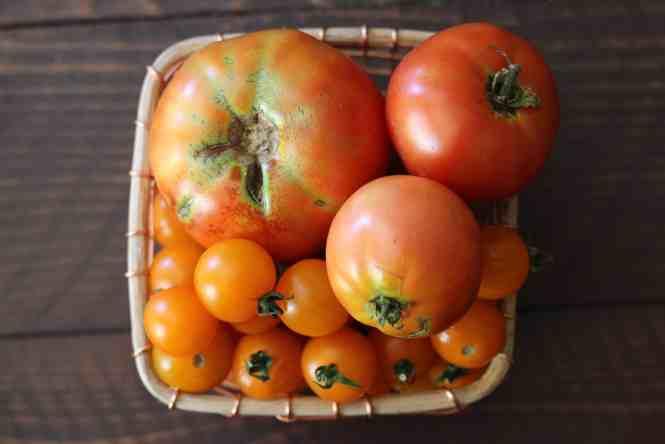 tomatoes, garden fresh tomatoes