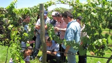 Photo of Se amplia la cultura vitivinícola en Querétaro