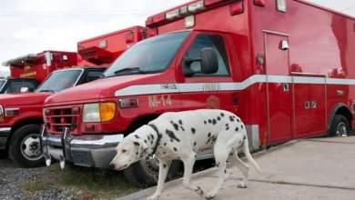 Photo of Urgente que municipios apoyen a cuerpos de bomberos: Roberto Cabrera