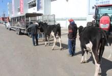 Photo of Gobierno Federal le da la espalda a los ganaderos