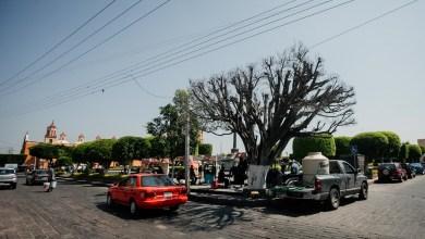 Photo of Inicia proceso de rescate de árbol en Plaza Independencia