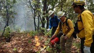 Photo of El combate a incendios forestales no se detendrá durante emergencia sanitaria