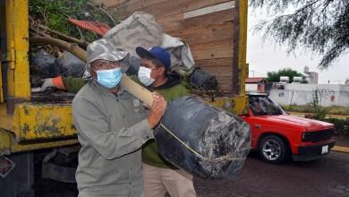 Photo of Continúa El Marqués con campañas de reforestación