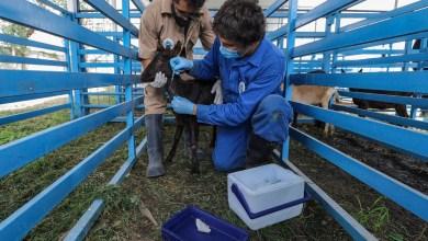 Photo of Comienza vacuna anti SARS CoV-2 de la UAQ con pruebas en animales