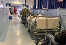 Photo of Se registran hasta 50 mil muertes a la semana por COVID-19