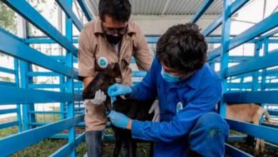 Photo of Vacuna UAQ contra COVID-19 tiene avances importantes