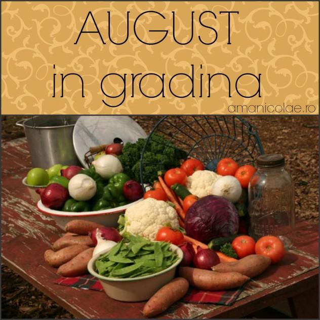 august in gradina