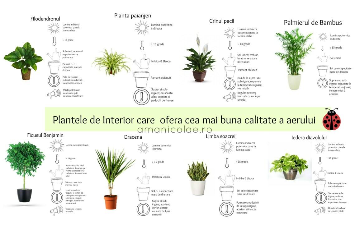 plantele de interior care ofera cea mai buna calitate a aerului de interior