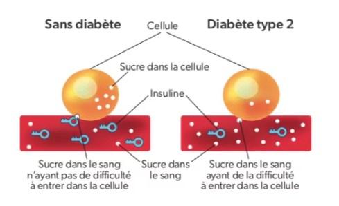 Le rôle de l'insuline