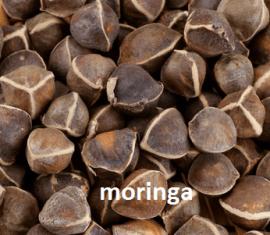 graines de Moringa Oleifera