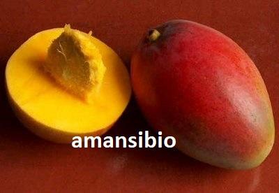mangue et noyau de mangue : : Endométriose guérison miraculeuse grâce au noyau de mangue