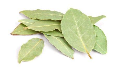 Les feuilles de laurier pour booster la fertilité
