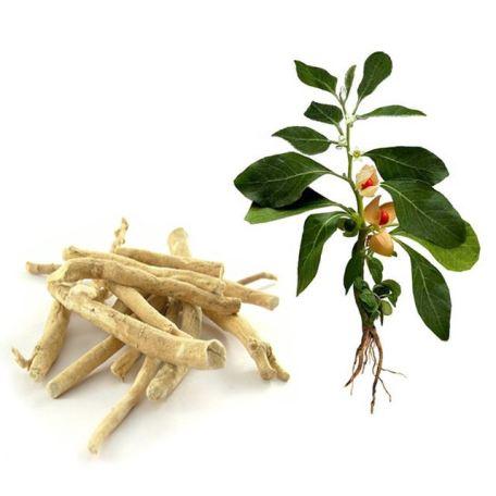 L'ashwagandha : la plante adaptogène